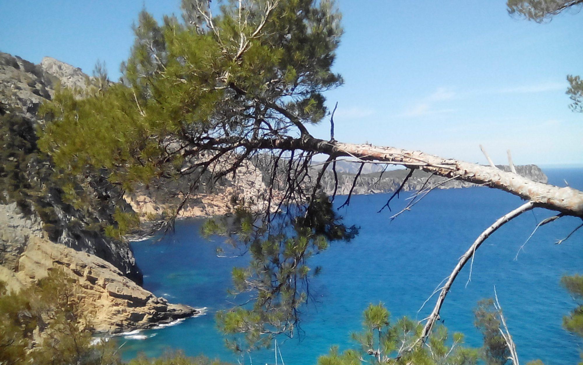 Mallorca aktiv erleben